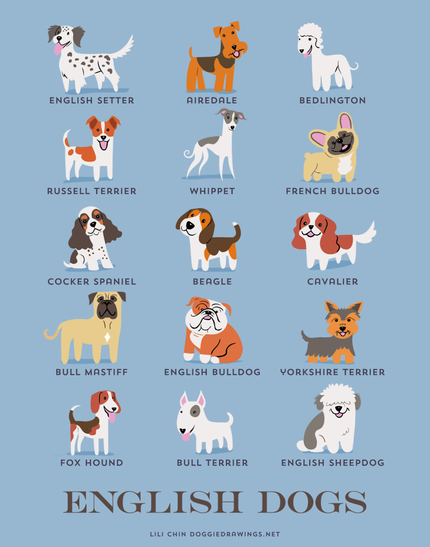 English dogs