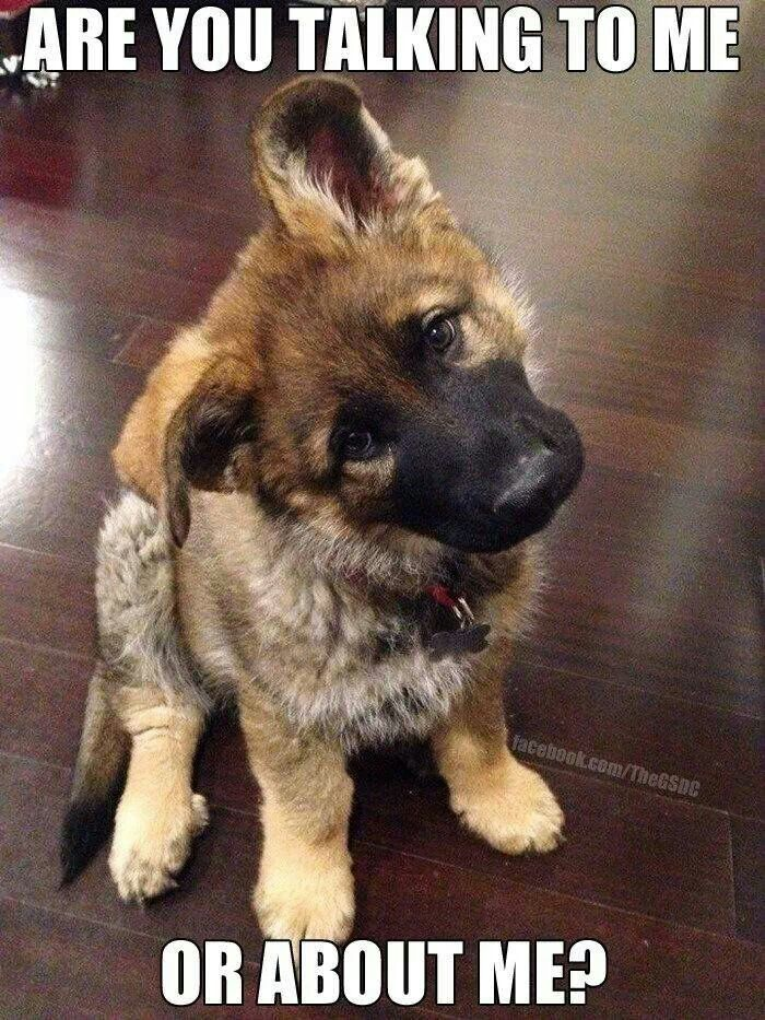 Cute German Shepherd Quotes 10 \x3cb\x3egerman shepherds\x3c/b\x3e ...