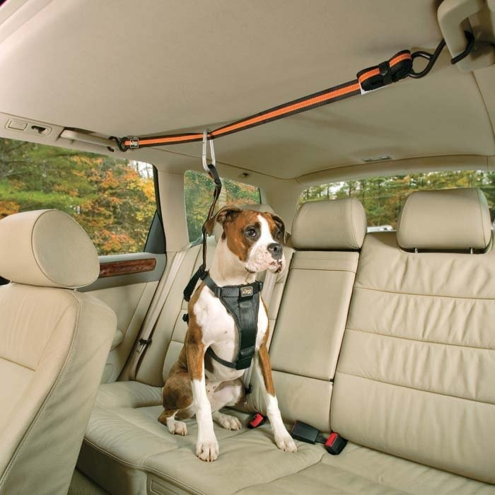 cute boxer car interior