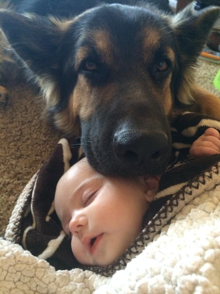 Think, german shepherd and kids accept