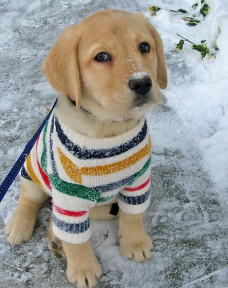 cute puppy winter pics outfit
