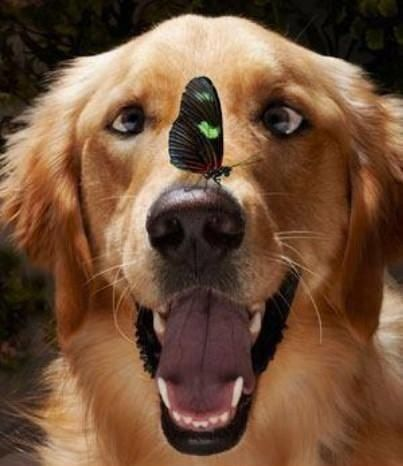 12 Funny Reasons Why Golden Retrievers Are The Best Dogs Ever - photo#29
