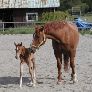 A baby male and female horse