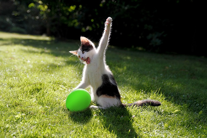 Cat and balloon