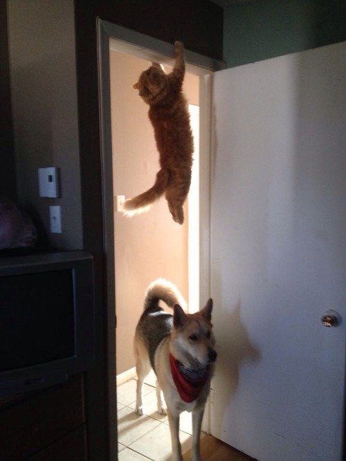 cat and dog funny