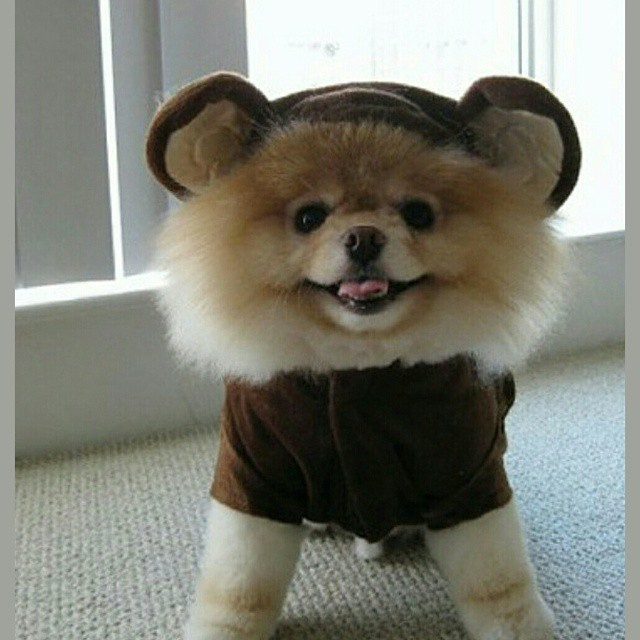 Dog Breed That Looks Like A Rug: Dogs That Look Like Little Bears