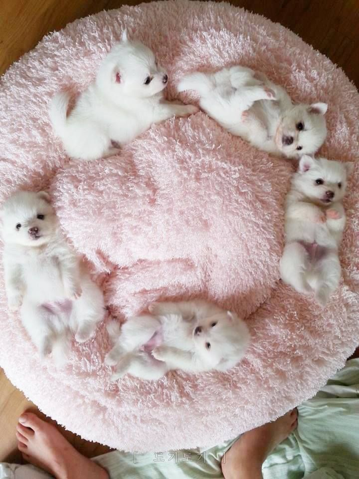 How to Take Care of Teacup Puppies How to Take Care of Teacup Puppies new picture