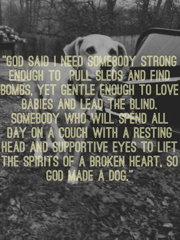 dog quote wisdom cute