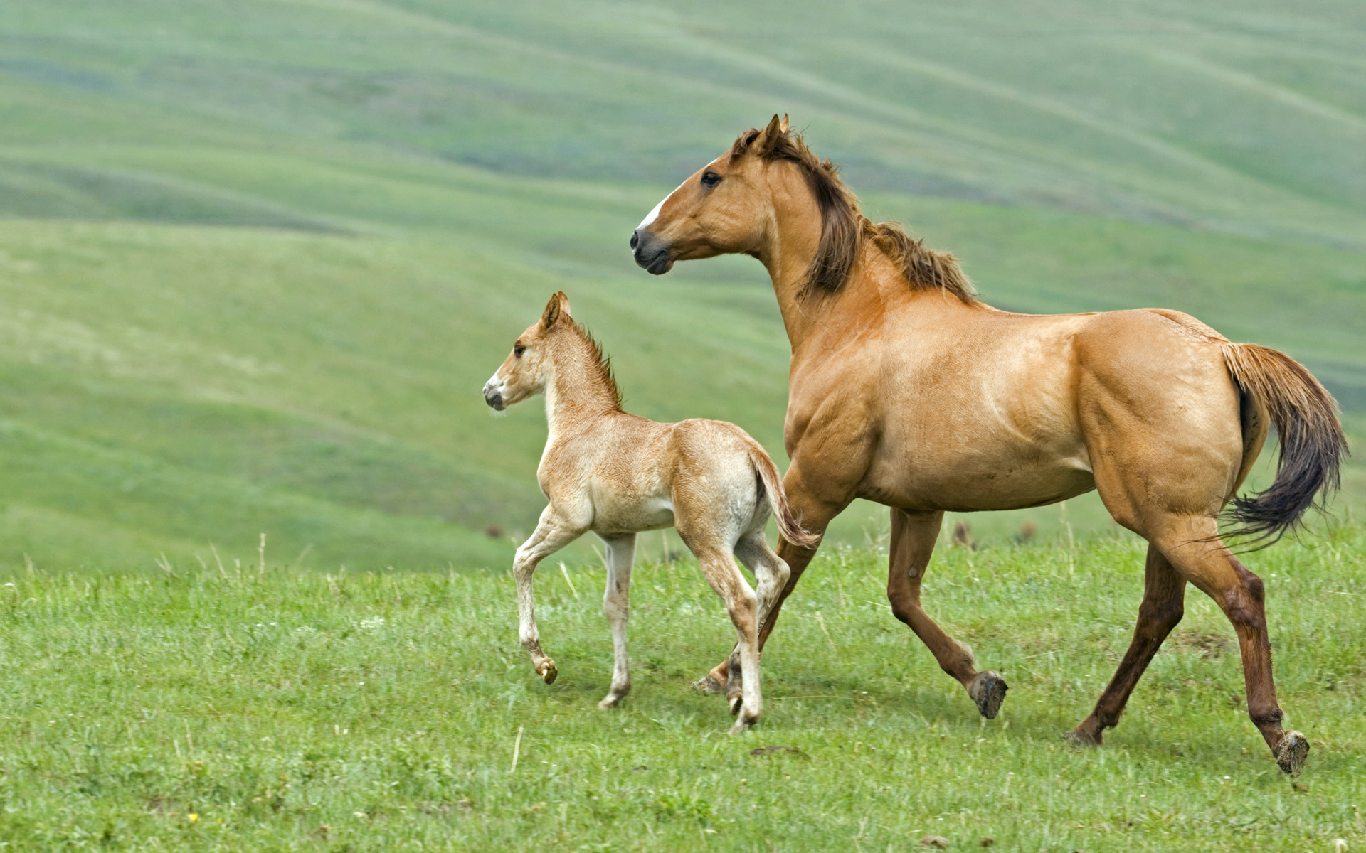What is a foal?
