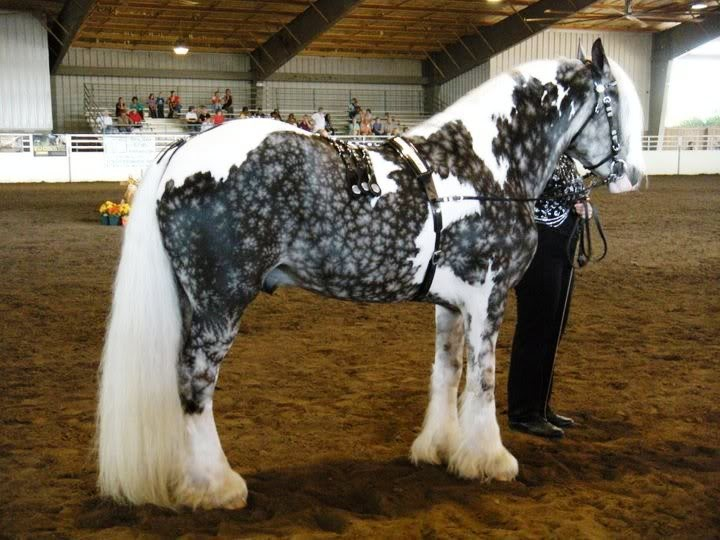 These 18 horses have the most unusual and beautiful colors in the world - Unique unique unique ...