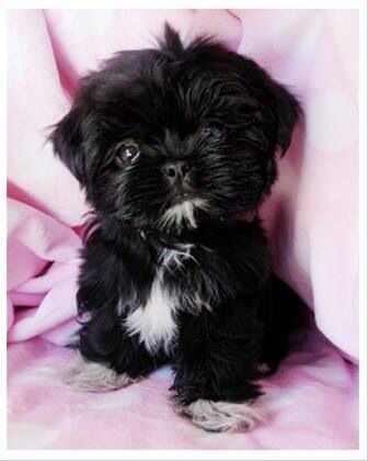 In China, Shih Tzu's were often cared for by: