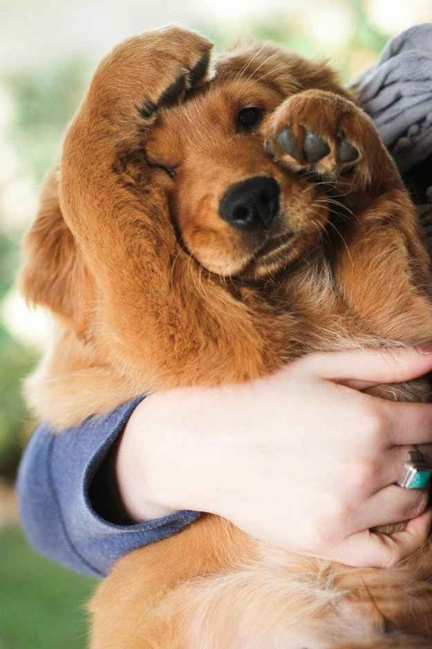 The first Golden Retriever to be registered with the AKC was in this year: