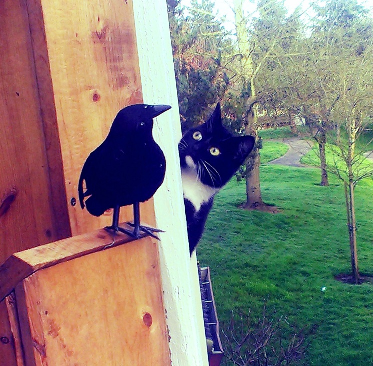 cat and fake raven