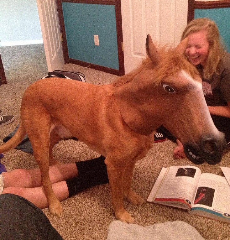 dog in horse mask