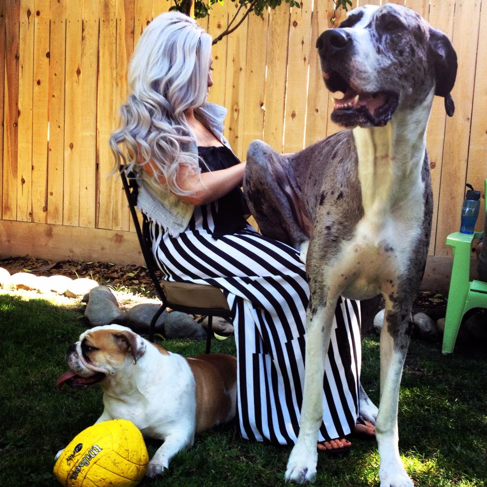 8 Problems Only Great Dane Owners Will Understand