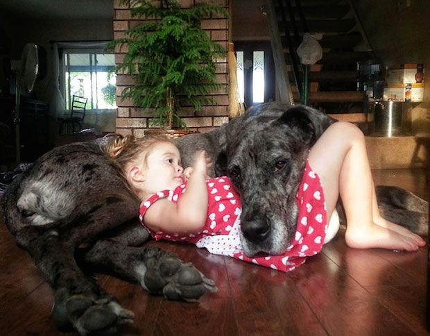 The Great Dane was named the state dog of which U.S. state?