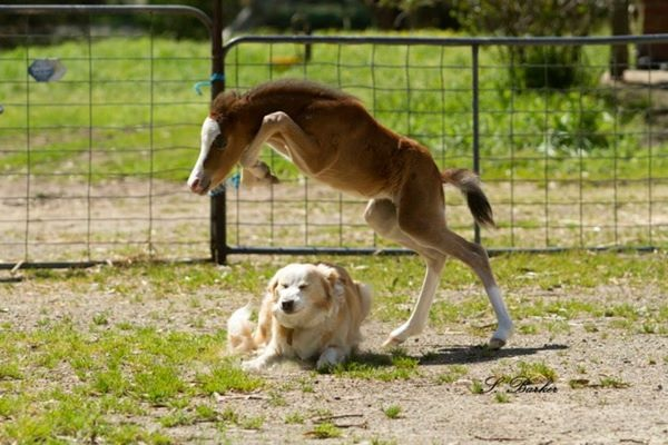 horse jumped over the dog