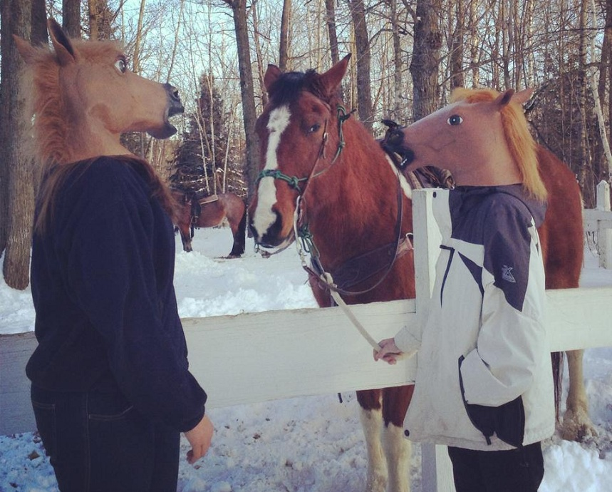 horse ranch funny
