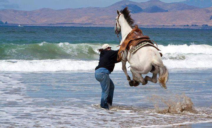 jumping horse funny