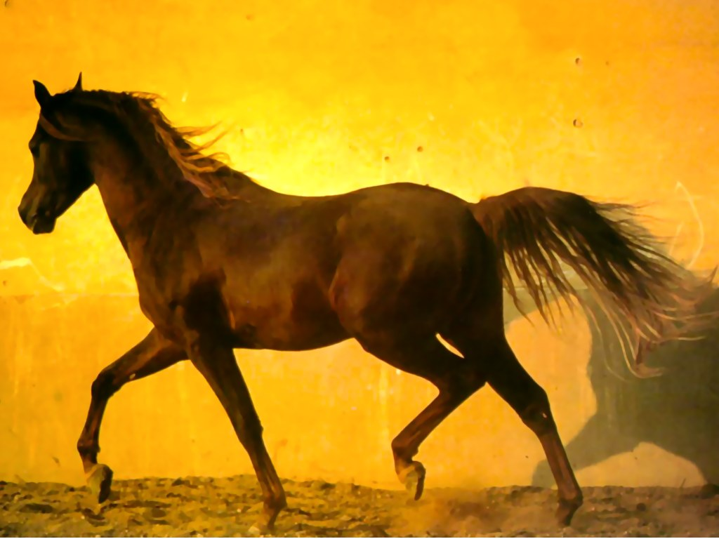 What is the 2nd fastest gait for most horses?