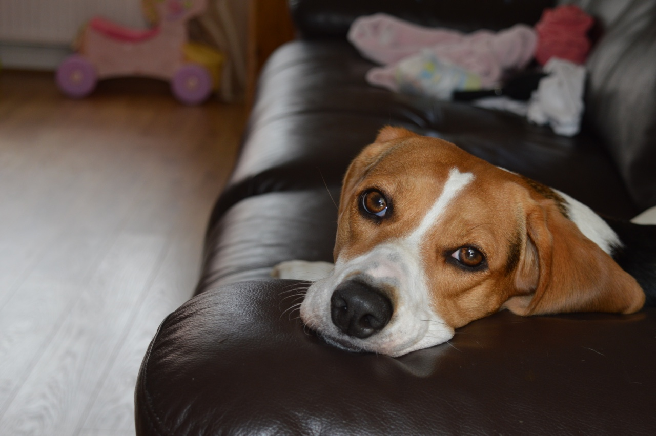 What comic hero is a beagle?