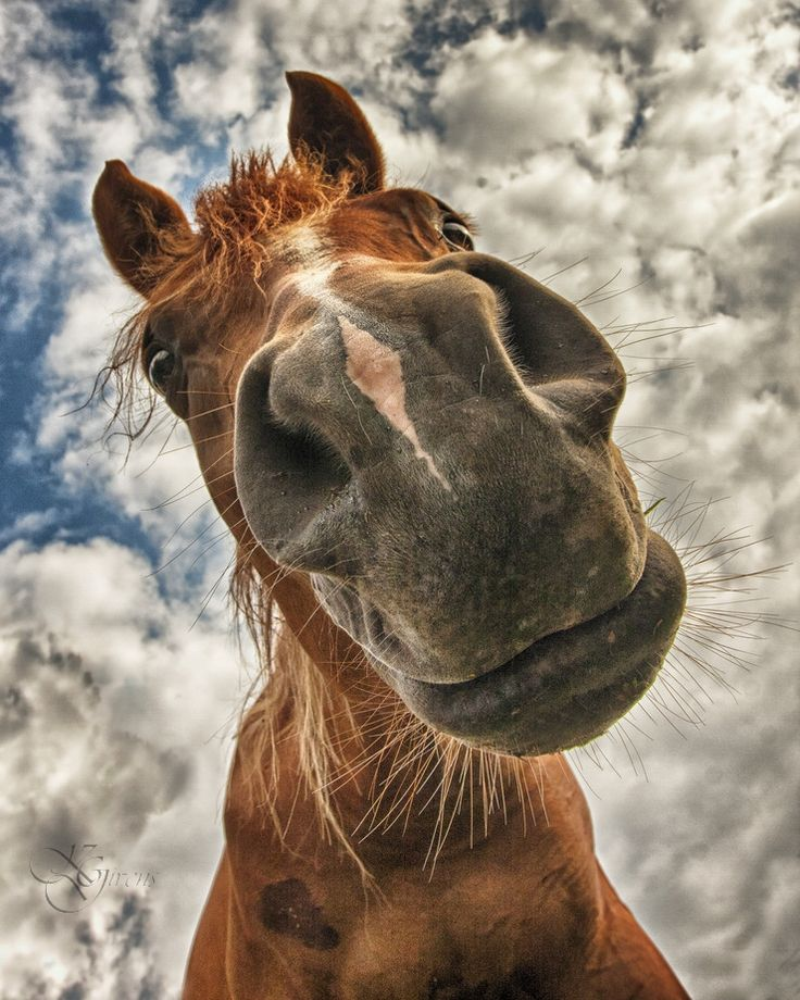 The 21 Worst Horse Selfies Of All Time