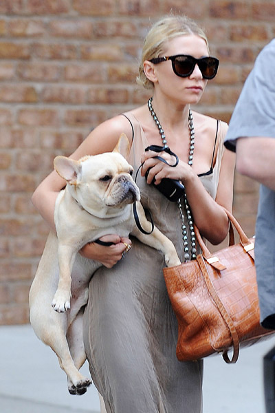 Celebrity with their dogs