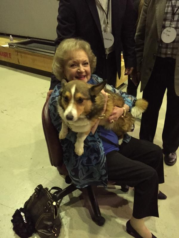 Betty White corgi