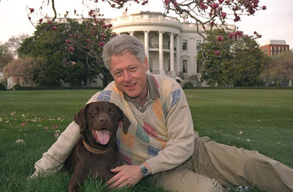 Bill Clinton labrador