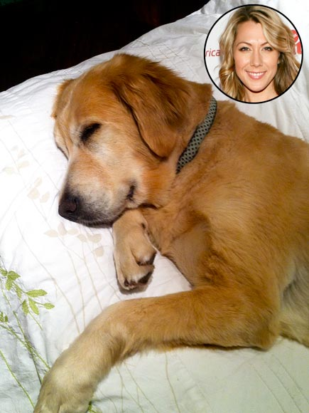 Colbie Caillat golden retriever
