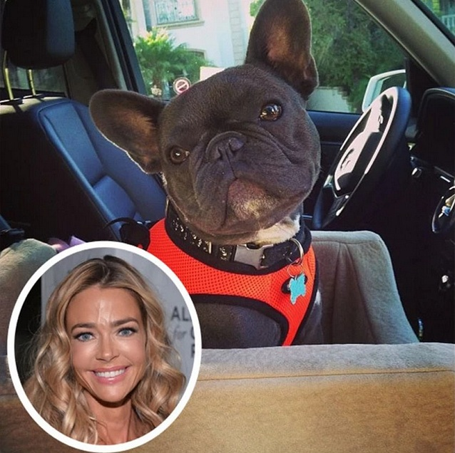 Denise Richards dog