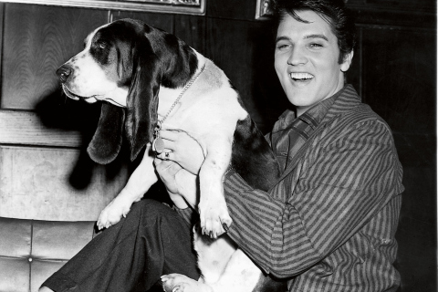 Elvis Presley with basset hound