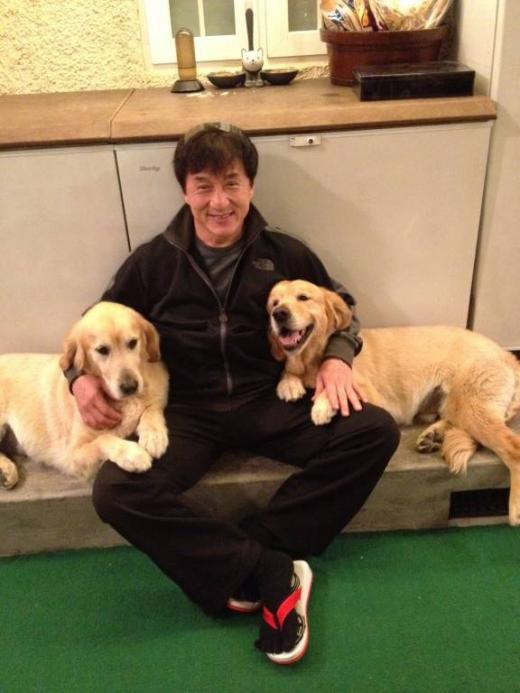Jackie Chan golden retriever
