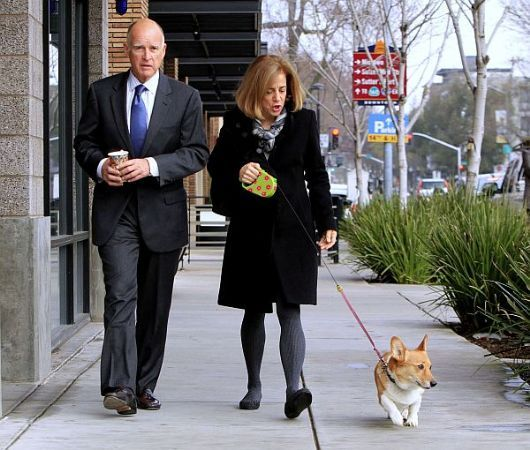 Jerry Brown corgi