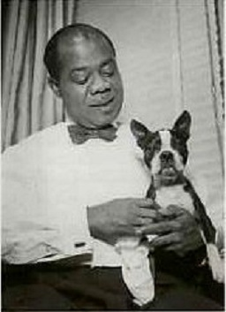 Louis-Armstrong boston terrier