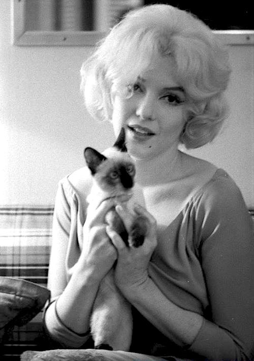Marilyn Monroe with cat