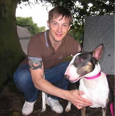 Tom Hardy bull terrier