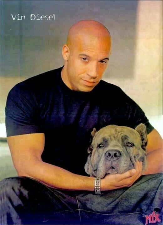 Vin Diesel with mastiff