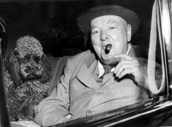 Winston Churchill poodle