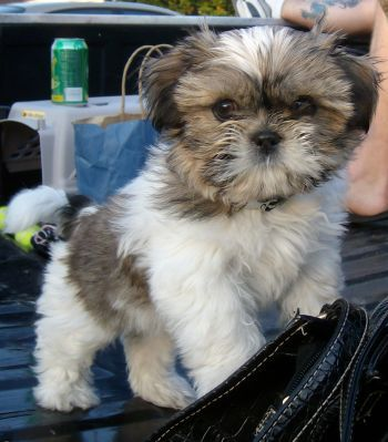 10 Unreal Maltese Cross Breeds You Have To See To Believe
