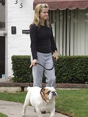 Reese Witherspoon bulldog