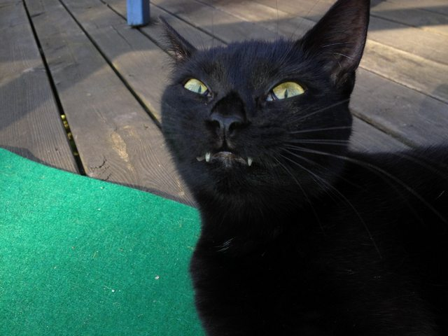 10 Cats Who Will Murder You In Your Sleep
