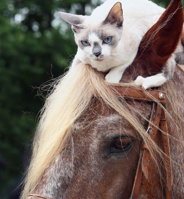 Kid Picture With Horse Dog And Cat