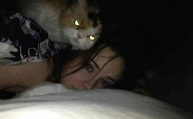 cat angry eyes face