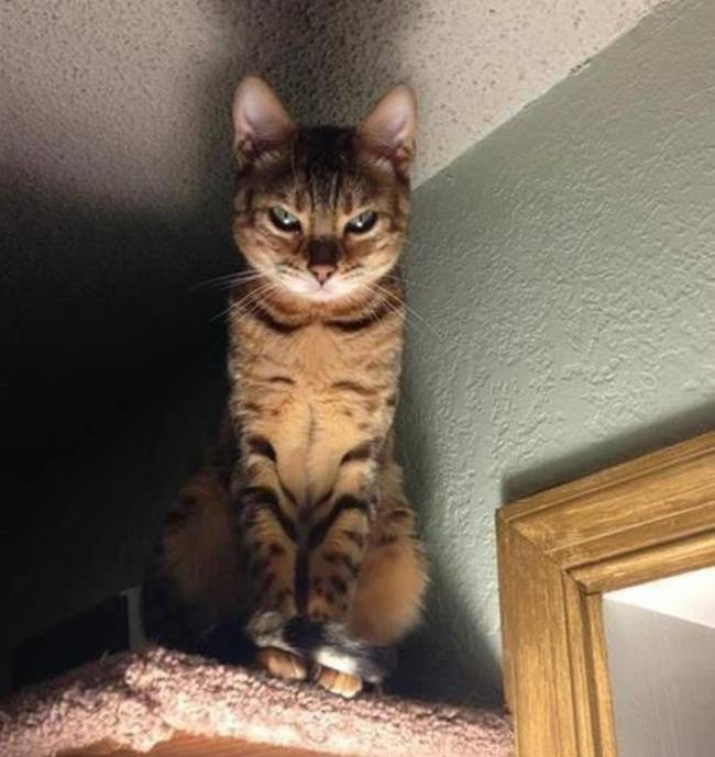 cat looking at you