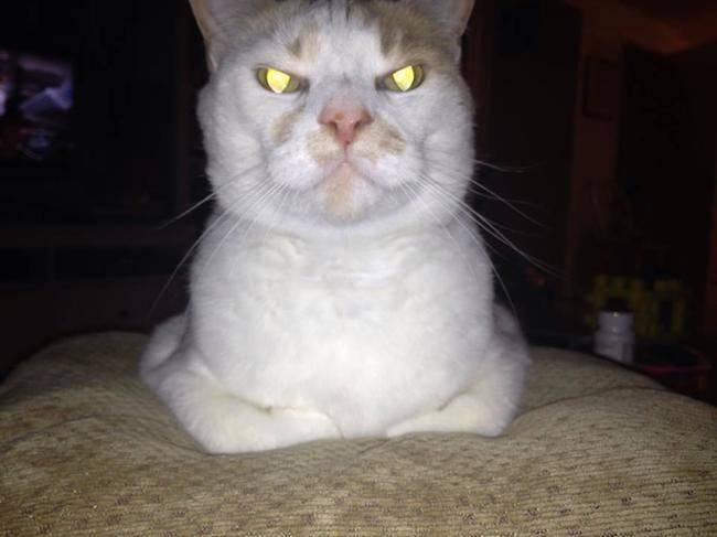 cats angry eyes