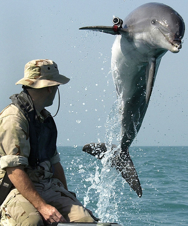 dolphin soldier