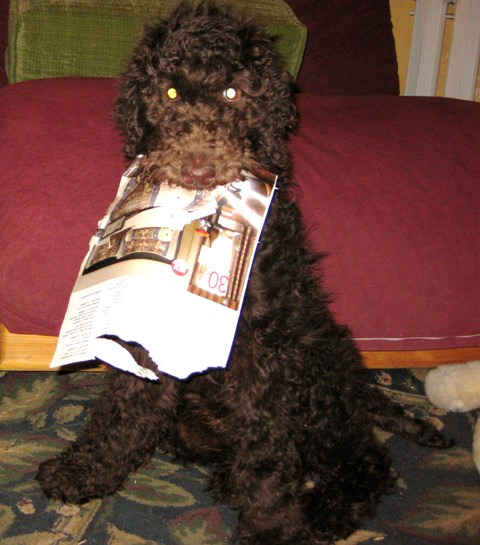 poodle play paper