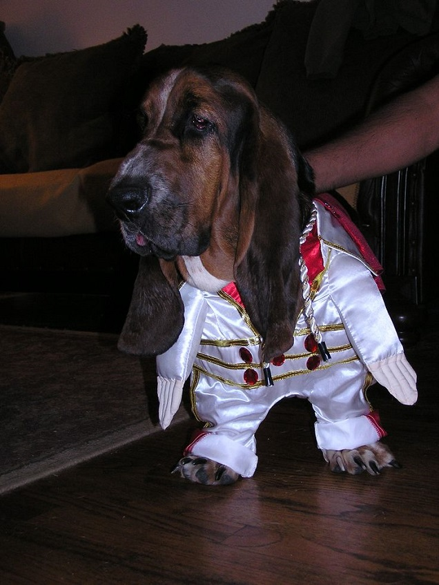 Dog Halloween Costumes For People