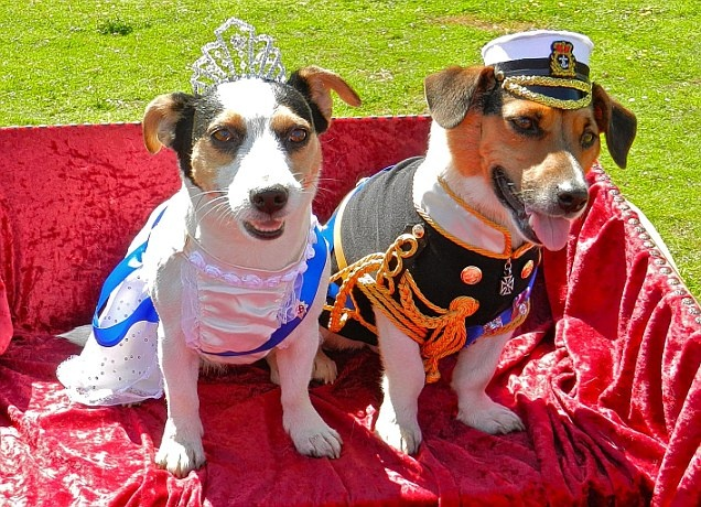 Jack Russell terriers dressed as the Queen and Prince Philip